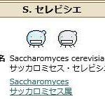 【一押しツイートまとめ】S.セレビシエ